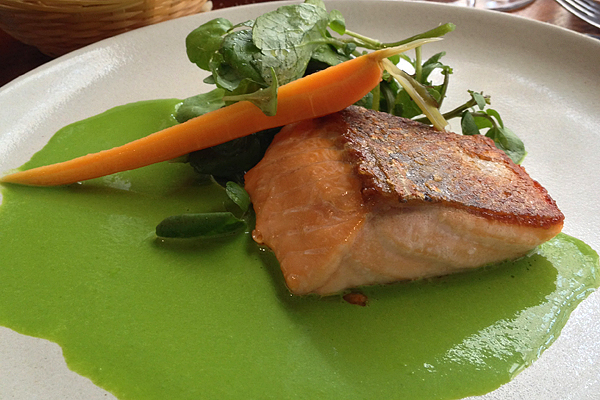Seared salmon with carrot and fresh herbs