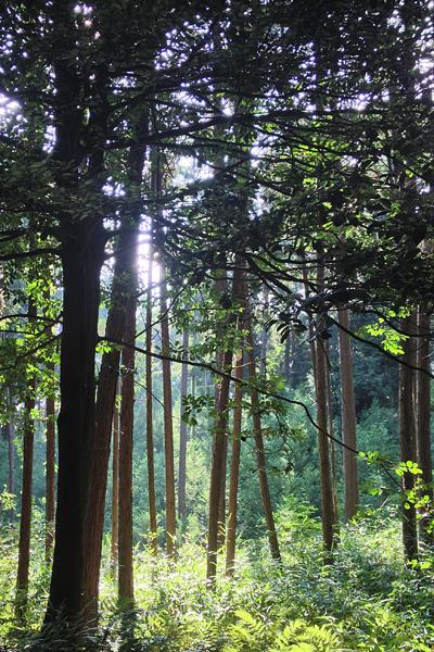 Fushimi inari forest